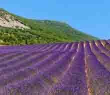lavendelrondreis-auto-provence-220x190.jpg